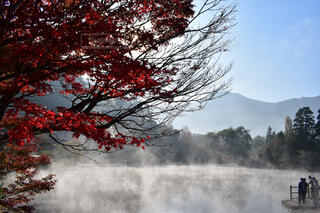 金鱗湖の朝霧と紅葉の写真・画像素材[3731295]