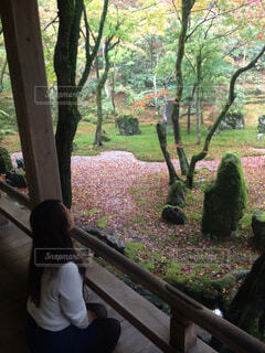 太宰府の紅葉の写真・画像素材[3732441]