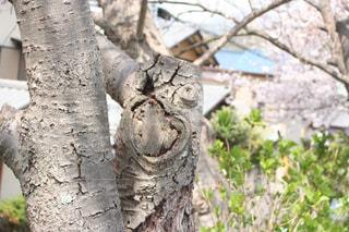 近くの木のアップの写真・画像素材[1120090]