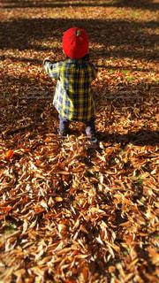 落ち葉で遊ぶの写真・画像素材[1618619]