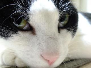 近くにカメラを見て猫のアップの写真・画像素材[1263641]