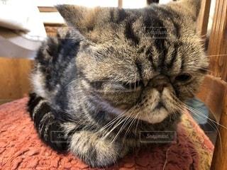 近くに猫のアップの写真・画像素材[1256024]