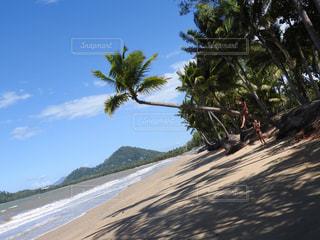 ヤシの木とビーチの写真・画像素材[1201571]