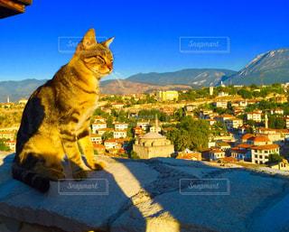 山の前に座っている猫の写真・画像素材[1047138]