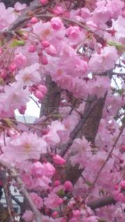 近くの花のアップの写真・画像素材[1122834]