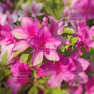 近くの花のアップの写真・画像素材[1147738]
