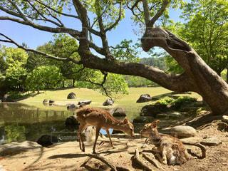 木の上に立っている牛の群れ - No.1048122