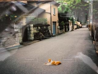 歩道の上に横たわる猫の写真・画像素材[1281997]