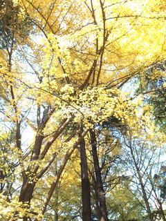 フォレスト内のツリーの写真・画像素材[1625146]