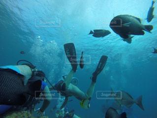 水の中を泳いでいる人の写真・画像素材[1048650]