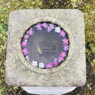 梅のフラワーリング - No.1050162