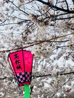 木からぶら下がって記号の写真・画像素材[1136889]