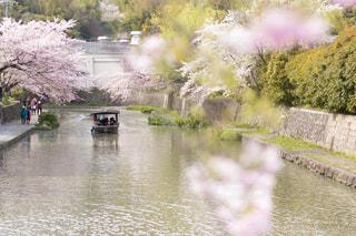 春 - No.403626