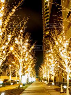 冬,夜,夜景,屋外,樹木,イルミネーション,都会,照明,明るい,グランフロント,景観,グランフロント大阪,シャンパンゴールド