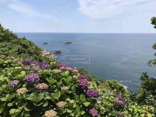 紫陽花と日向灘の写真・画像素材[1049544]