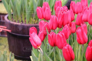 春の匂いの写真・画像素材[1051274]