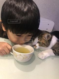 猫,子供,お茶,美味しい,緑茶