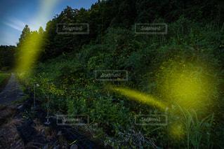 近くの緑豊かな緑の森の写真・画像素材[1265671]