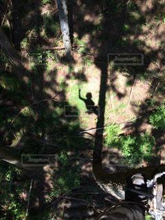 フォレスト内のツリーの写真・画像素材[1050552]