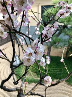 花,温泉,ピンク,綺麗