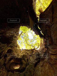 樹木の中から見える緑の写真・画像素材[1177786]