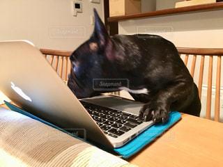 テーブルの上で作業中の犬の写真・画像素材[1528211]