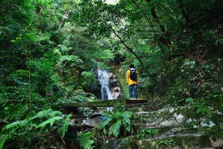 男性,30代,自然,風景,秋,森林,木,森,緑,水,滝,樹木,旅行,旅,午後,ジャケット,山登り,パーカー