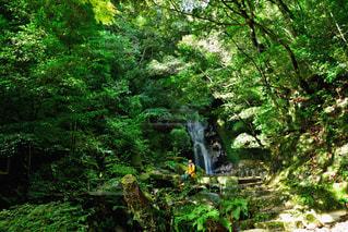 男性,30代,自然,風景,秋,森林,木,森,緑,男,滝,樹木,旅行,旅,午後,探検,ジャケット,山登り,パーカー