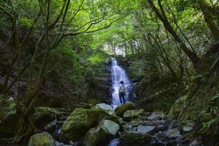 森の中の大きな滝の写真・画像素材[1733196]