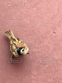 おねだりスズメの写真・画像素材[1066099]