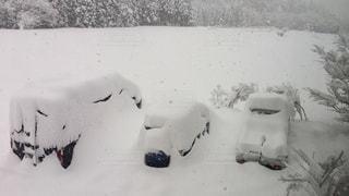 降り積もる雪の写真・画像素材[1073989]