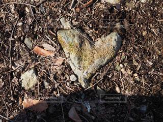 ゴミの山の写真・画像素材[1131699]