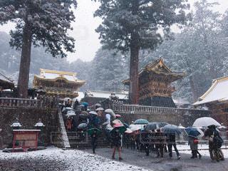 冬,傘,雪,白,日光東照宮,栃木,寺社,銀世界