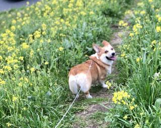 草の上に犬立ってカバー フィールドの写真・画像素材[1184026]