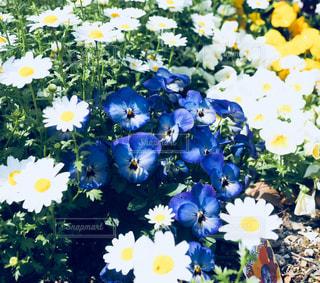 花,春,夏,青,日本,フォトジェニック,インスタ映え
