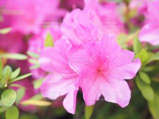 公園,花,紫,樹木,日本,グリーン,ビビット,草木,ガーデン