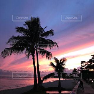 海,空,夕暮れ,ヤシの木,ハワイ,Hawaii