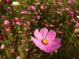 近くの花のアップの写真・画像素材[1466818]