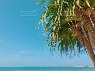 水の体の横にあるヤシの木のグループの写真・画像素材[1136993]