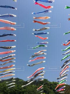空に凧の飛行の人々 のグループの写真・画像素材[1158354]