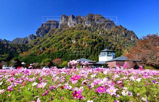 ポピーと妙義山の写真・画像素材[1456681]