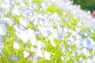 近くの花のアップの写真・画像素材[1152884]