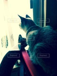 猫の写真・画像素材[44526]