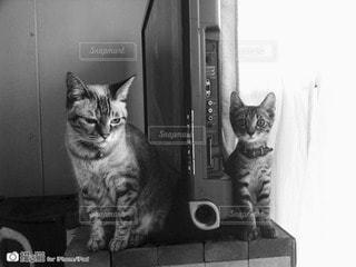 猫の写真・画像素材[44536]