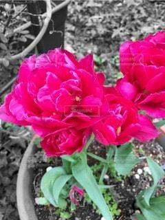 花の写真・画像素材[55122]