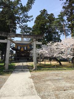 空,桜,神社,パワースポット,草木,日中,氏神様