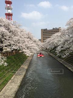 自然,桜,屋外,青空,川,遊覧船