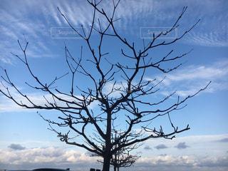沖縄の空の写真・画像素材[1105918]