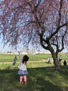 枝垂れ桜に触ろうとする娘の写真・画像素材[1109095]