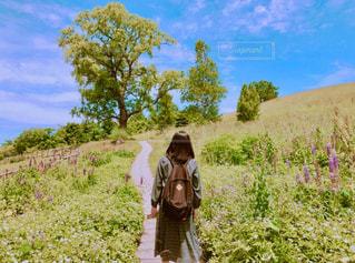 自然,風景,夏,緑,植物,草原,晴れ,青空,散歩,女の子,光,丘,人物,木立,明るい